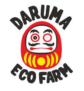 daruma_trans_2